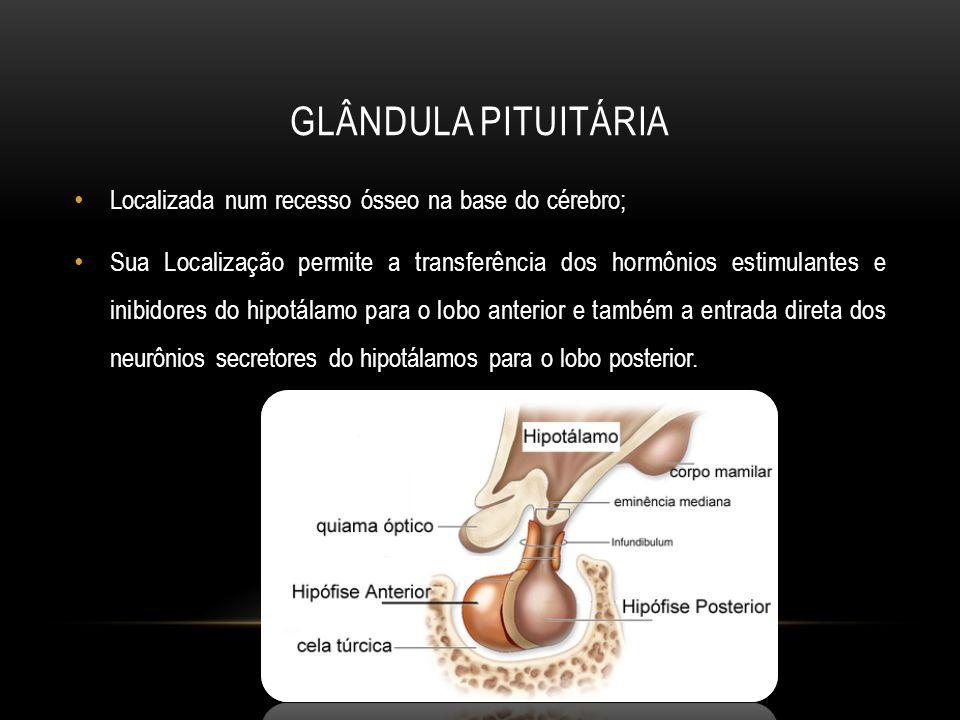 Glândula Pituitária Localizada num recesso ósseo na base do cérebro;