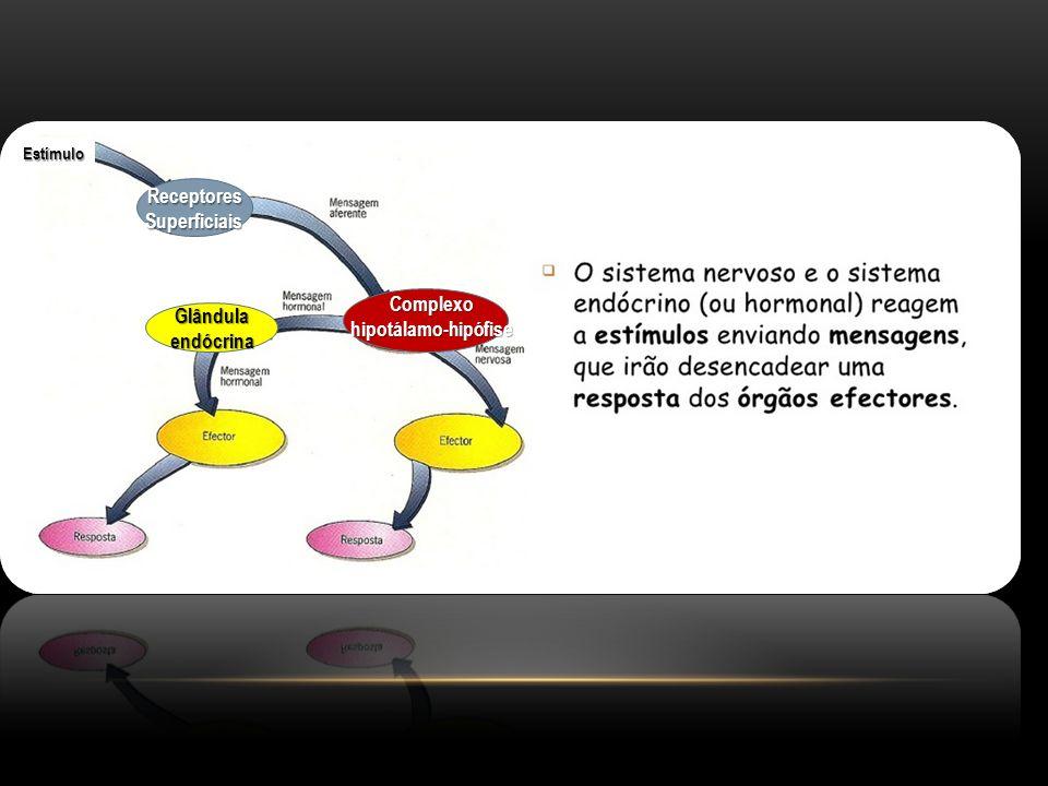 Receptores Superficiais Complexo hipotálamo-hipófise
