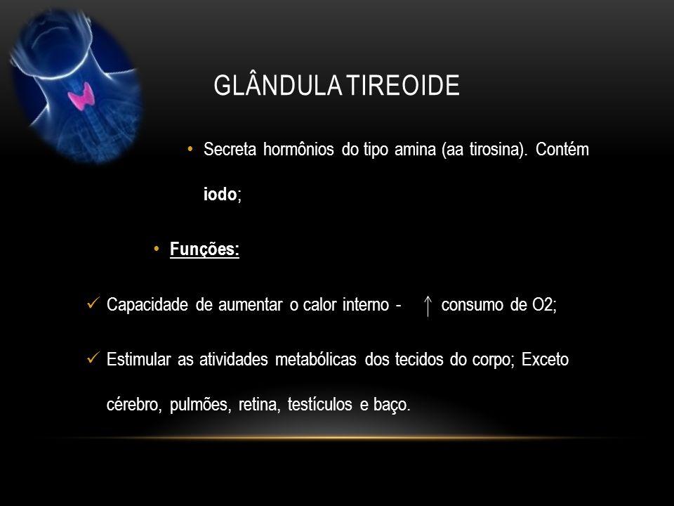 glândula tireoide Secreta hormônios do tipo amina (aa tirosina). Contém iodo; Funções: