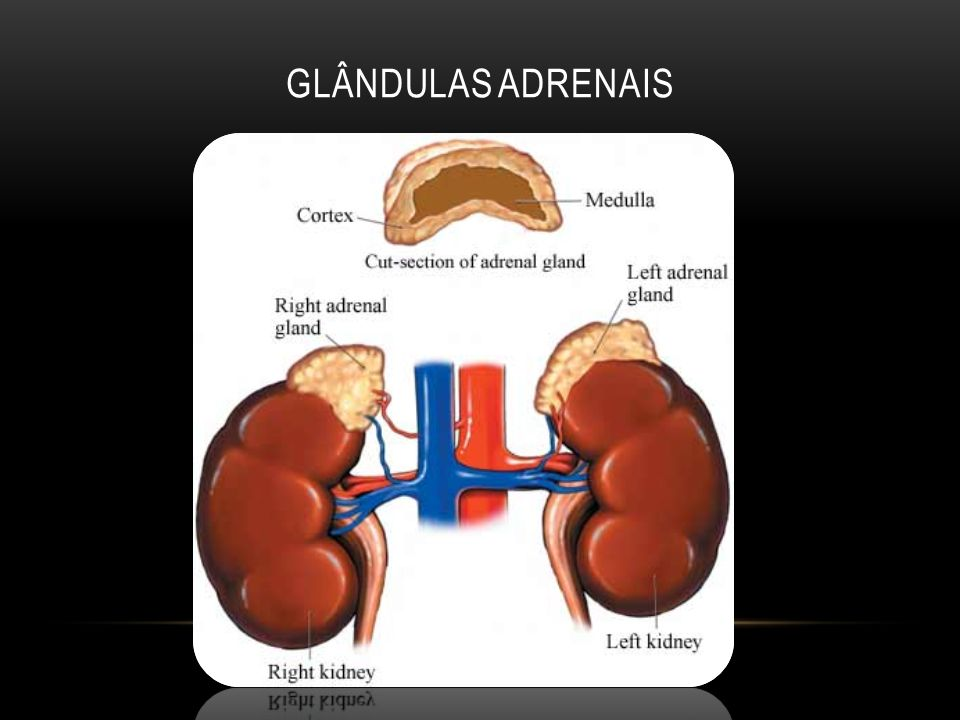 Glândulas adrenais