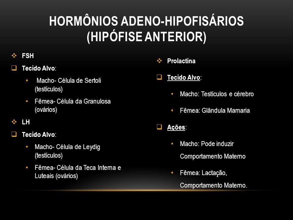Hormônios Adeno-Hipofisários (Hipófise Anterior)