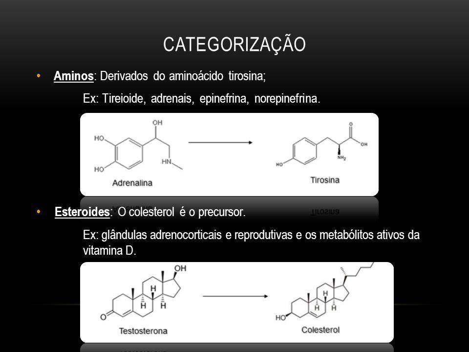 Categorização Aminos: Derivados do aminoácido tirosina;