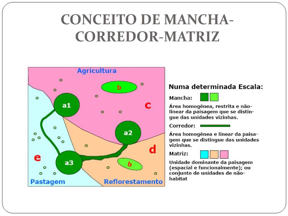 CONCEITO DE MANCHA-CORREDOR-MATRIZ
