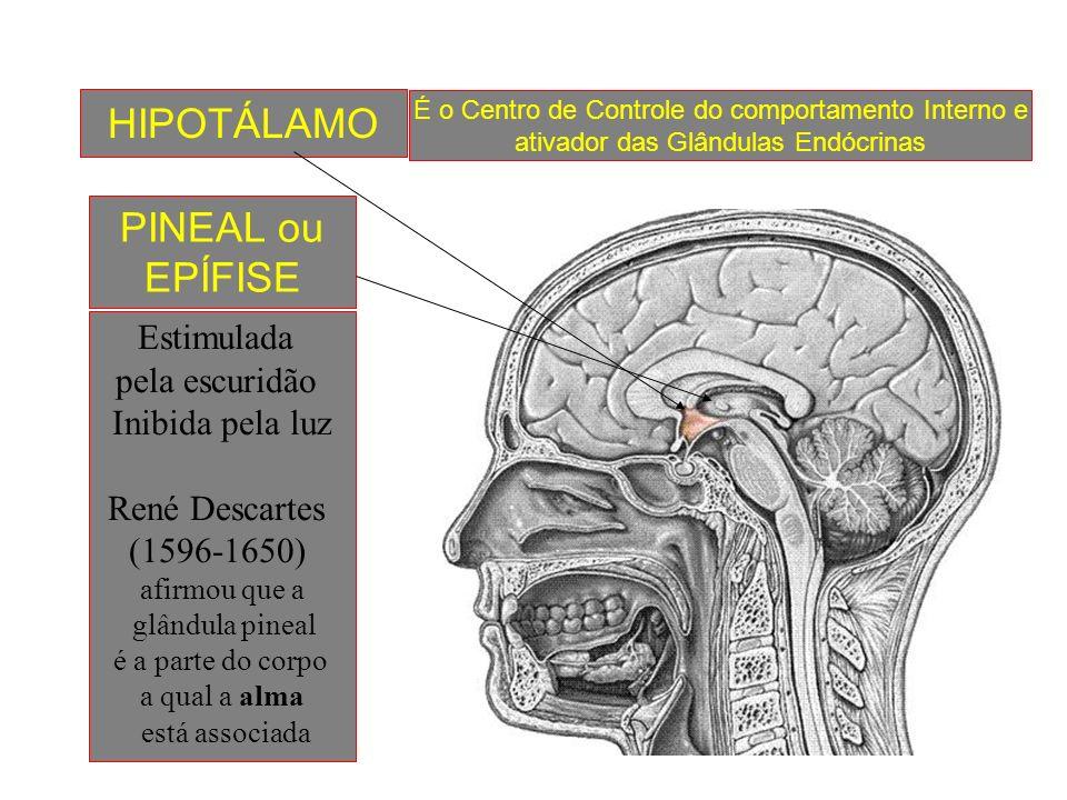 HIPOTÁLAMO PINEAL ou EPÍFISE Estimulada pela escuridão
