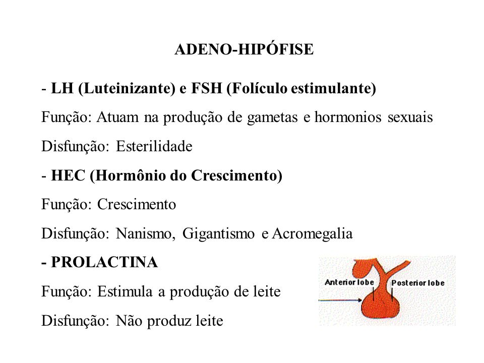 ADENO-HIPÓFISE - LH (Luteinizante) e FSH (Folículo estimulante) Função: Atuam na produção de gametas e hormonios sexuais.