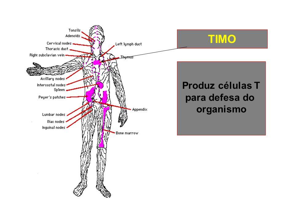 TIMO Produz células T para defesa do organismo