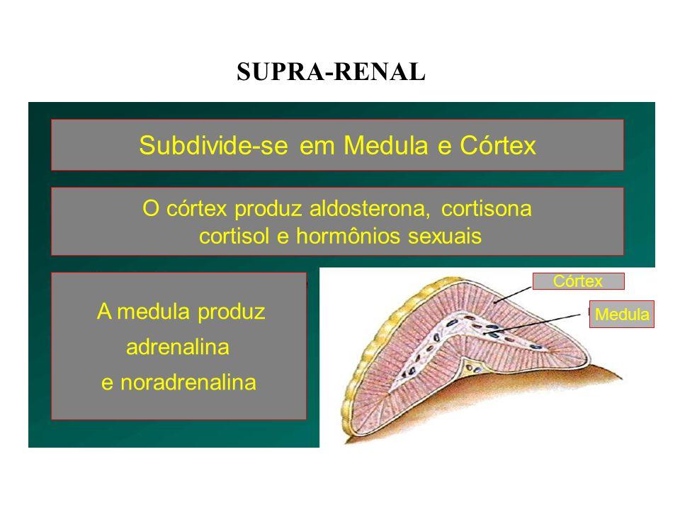 Subdivide-se em Medula e Córtex