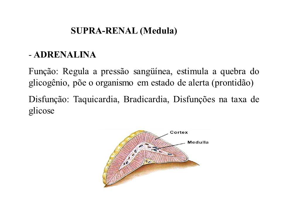 SUPRA-RENAL (Medula) ADRENALINA.