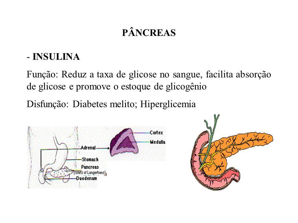PÂNCREAS INSULINA. Função: Reduz a taxa de glicose no sangue, facilita absorção de glicose e promove o estoque de glicogênio.
