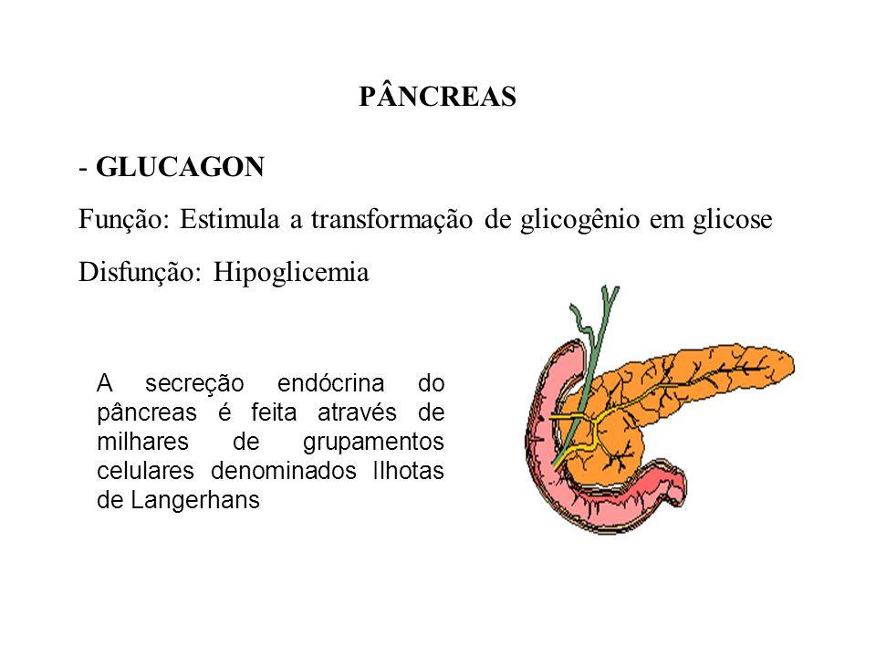 Função: Estimula a transformação de glicogênio em glicose