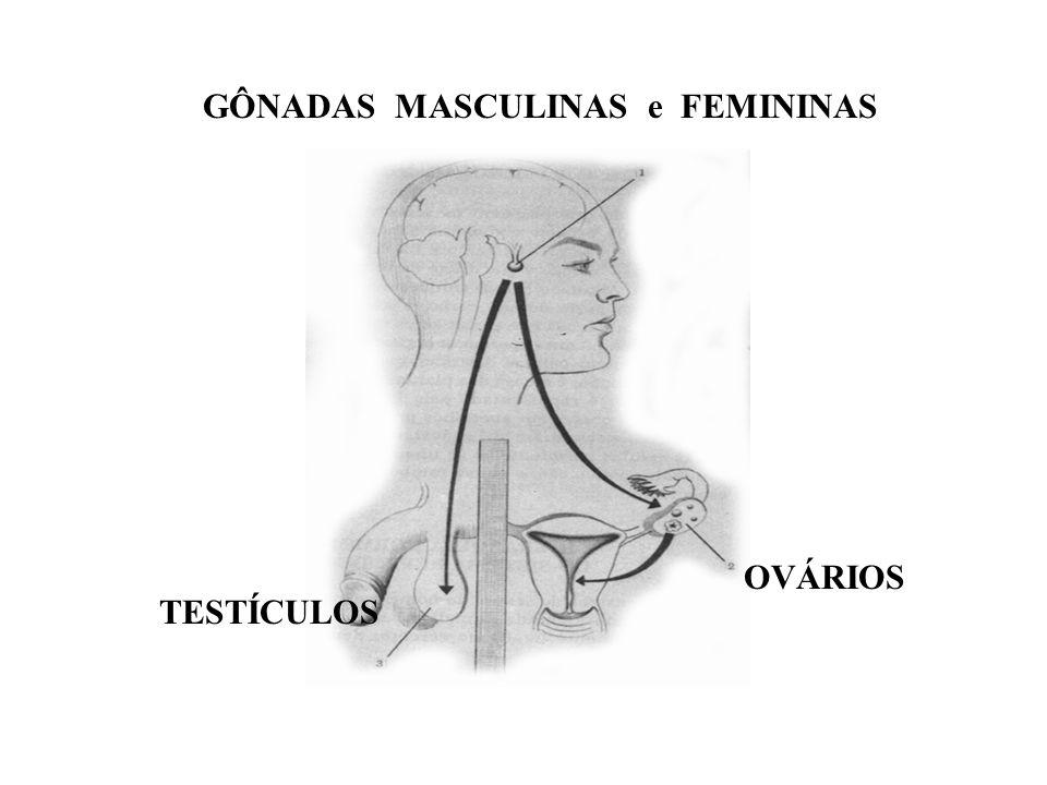 GÔNADAS MASCULINAS e FEMININAS