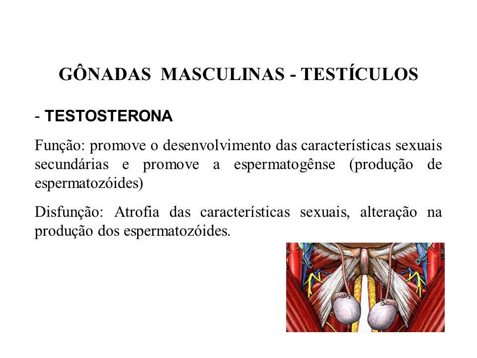 GÔNADAS MASCULINAS - TESTÍCULOS