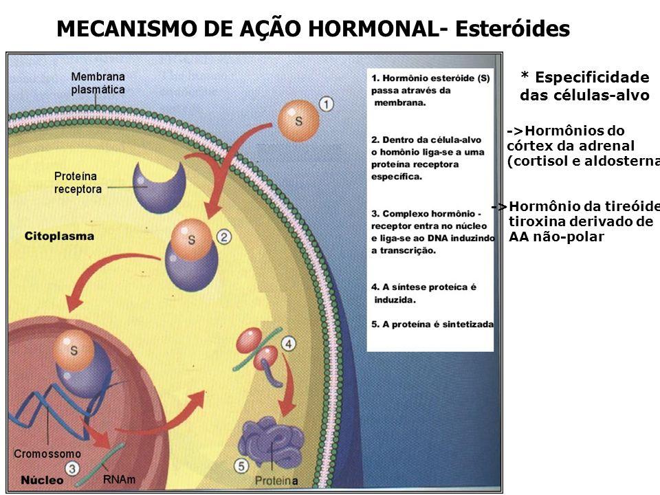 MECANISMO DE AÇÃO HORMONAL- Esteróides