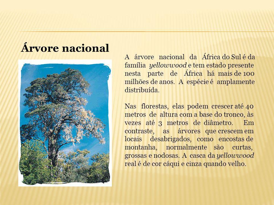 Árvore nacional