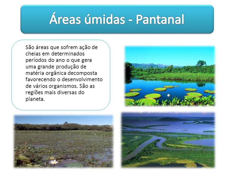 Áreas úmidas - Pantanal