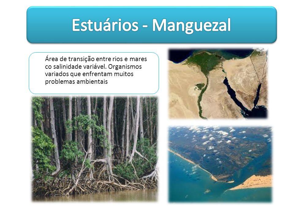 Estuários - Manguezal Área de transição entre rios e mares co salinidade variável.