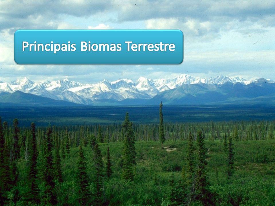 Principais Biomas Terrestre