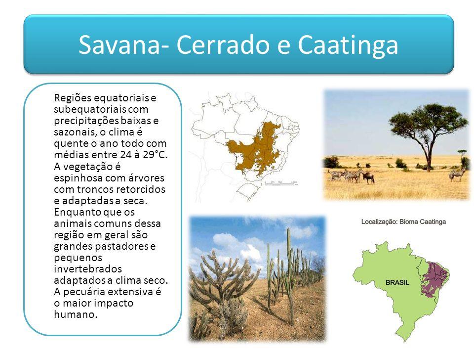 Savana- Cerrado e Caatinga