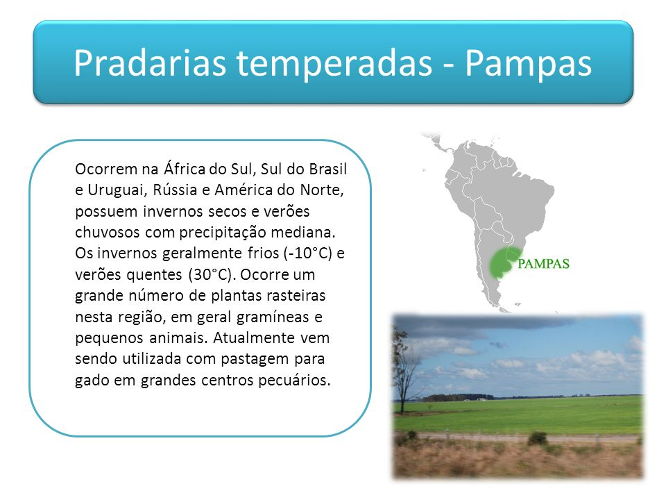 Pradarias temperadas - Pampas