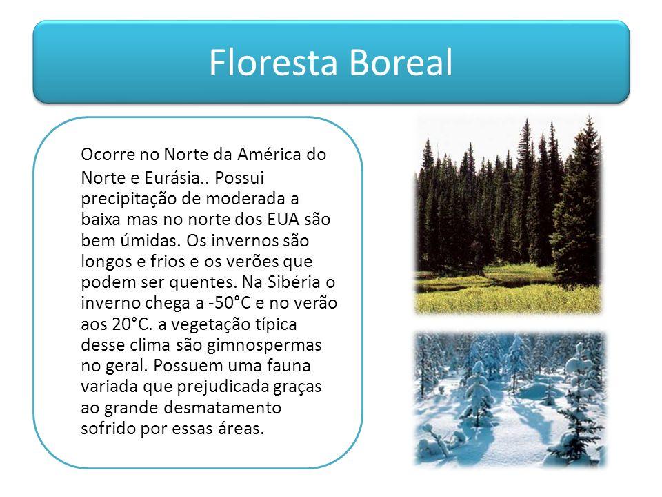 Floresta Boreal