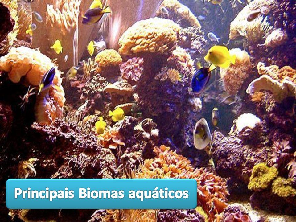 Principais Biomas aquáticos