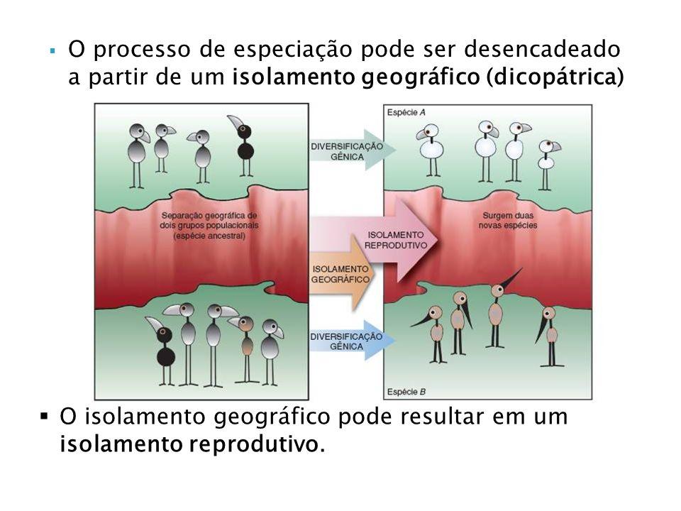 O processo de especiação pode ser desencadeado a partir de um isolamento geográfico (dicopátrica)