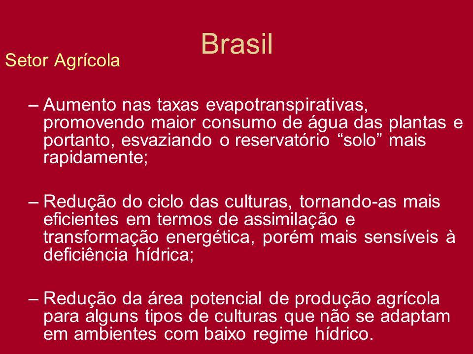 Brasil Setor Agrícola.