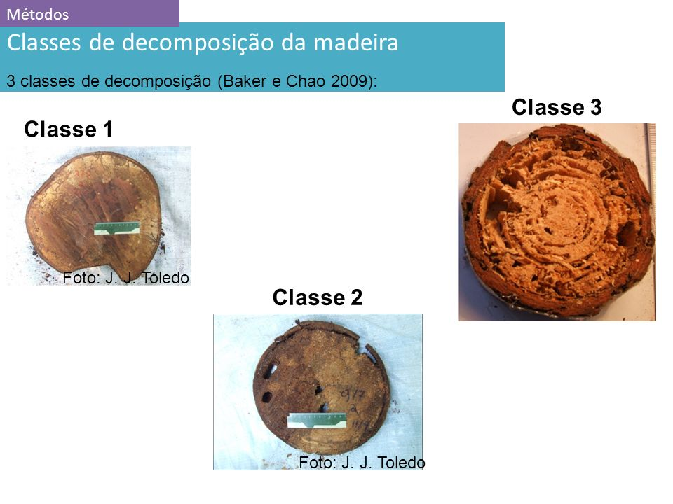 Classes de decomposição da madeira
