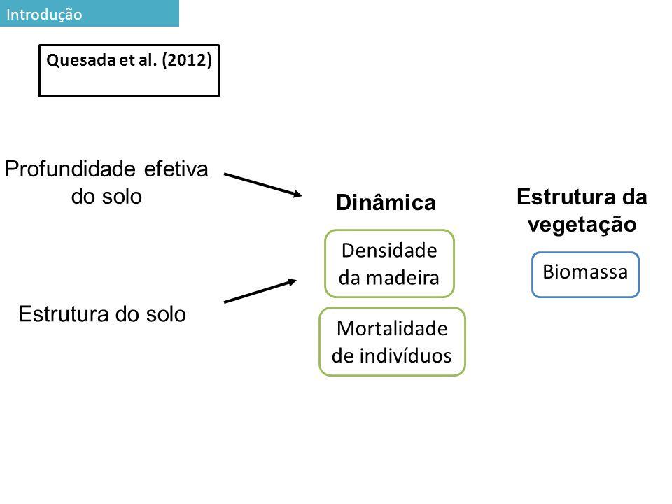 Estrutura da vegetação