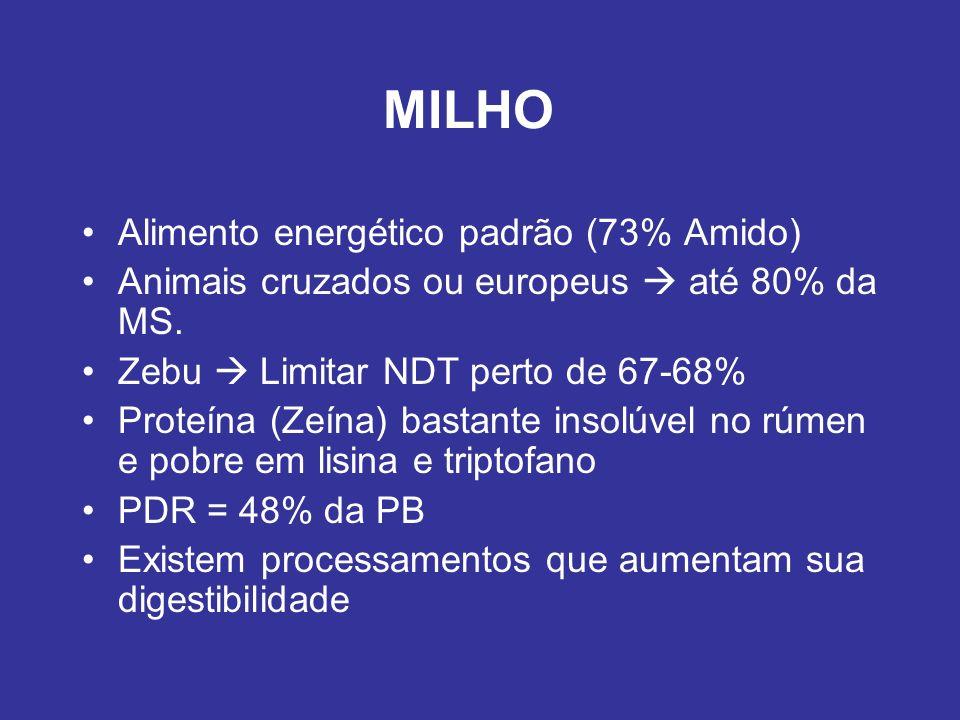 MILHO Alimento energético padrão (73% Amido)