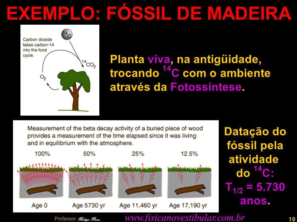 EXEMPLO: FÓSSIL DE MADEIRA