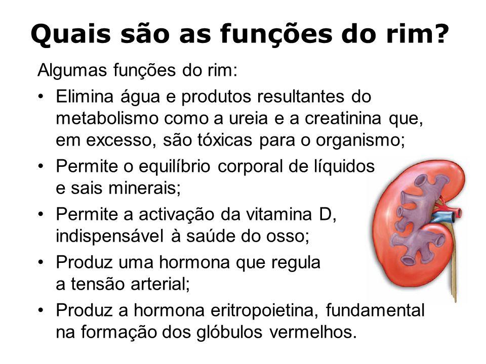 Quais são as funções do rim