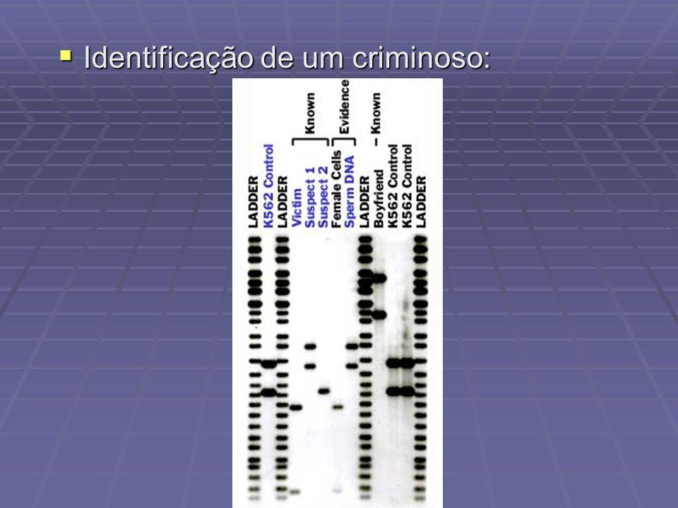Identificação de um criminoso: