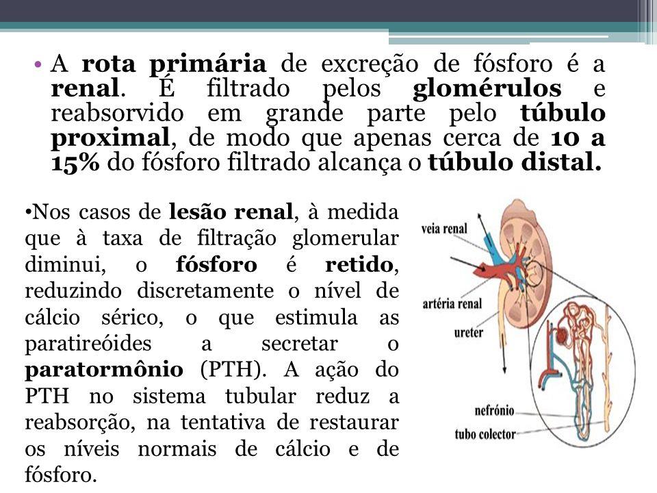 A rota primária de excreção de fósforo é a renal