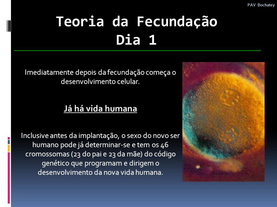 Teoria da Fecundação Dia 1