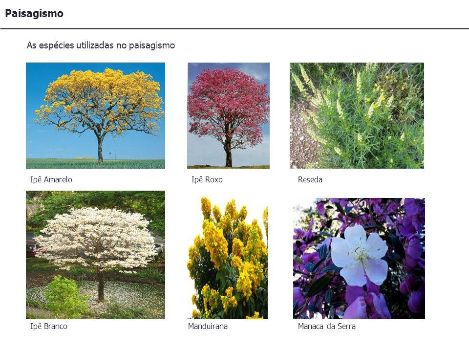 Paisagismo As espécies utilizadas no paisagismo Ipê Amarelo Ipê Roxo