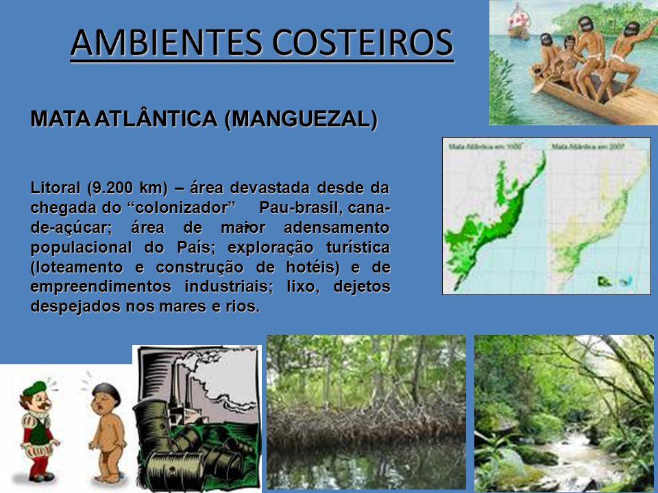 AMBIENTES COSTEIROS MATA ATLÂNTICA (MANGUEZAL)