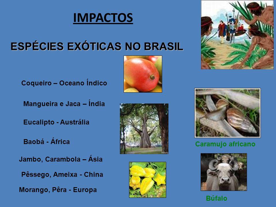 IMPACTOS ESPÉCIES EXÓTICAS NO BRASIL Coqueiro – Oceano Índico
