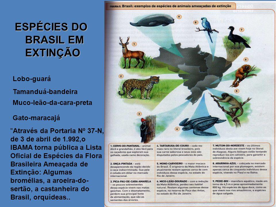ESPÉCIES DO BRASIL EM EXTINÇÃO