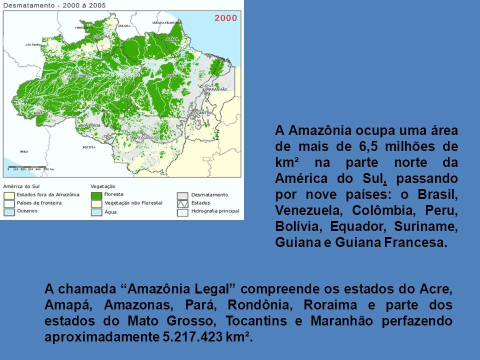 A Amazônia ocupa uma área de mais de 6,5 milhões de km² na parte norte da América do Sul, passando por nove países: o Brasil, Venezuela, Colômbia, Peru, Bolívia, Equador, Suriname, Guiana e Guiana Francesa.
