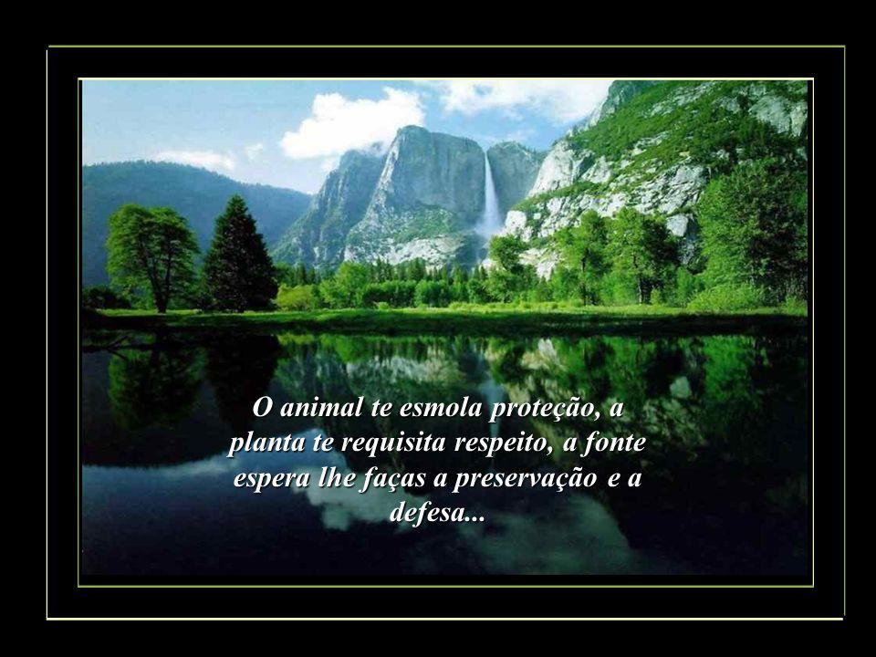 O animal te esmola proteção, a planta te requisita respeito, a fonte espera lhe faças a preservação e a defesa...