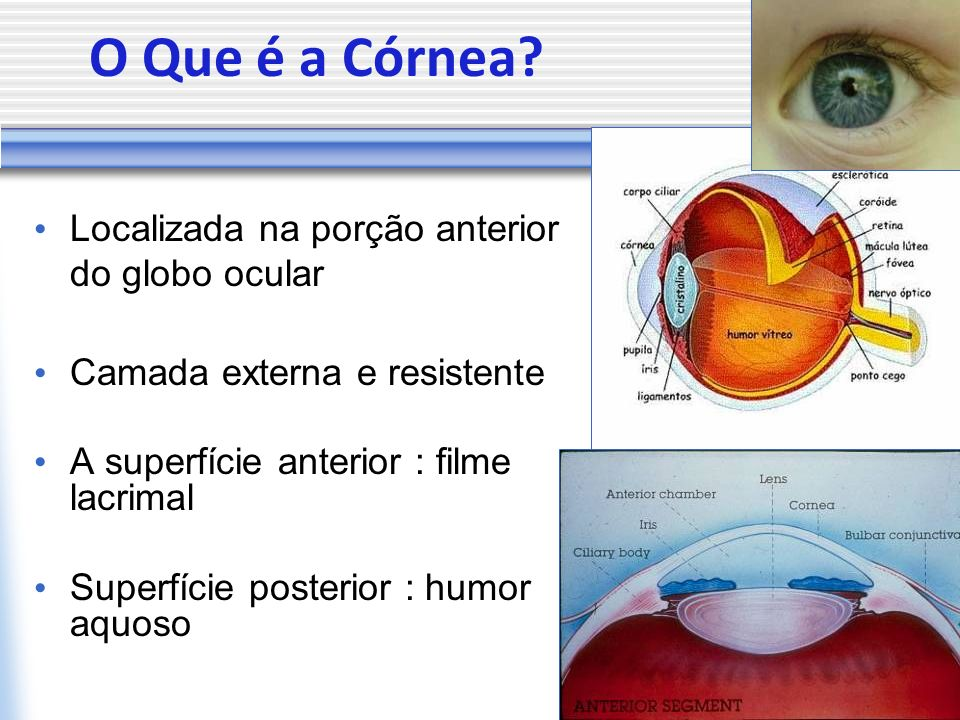 O Que é a Córnea Localizada na porção anterior do globo ocular