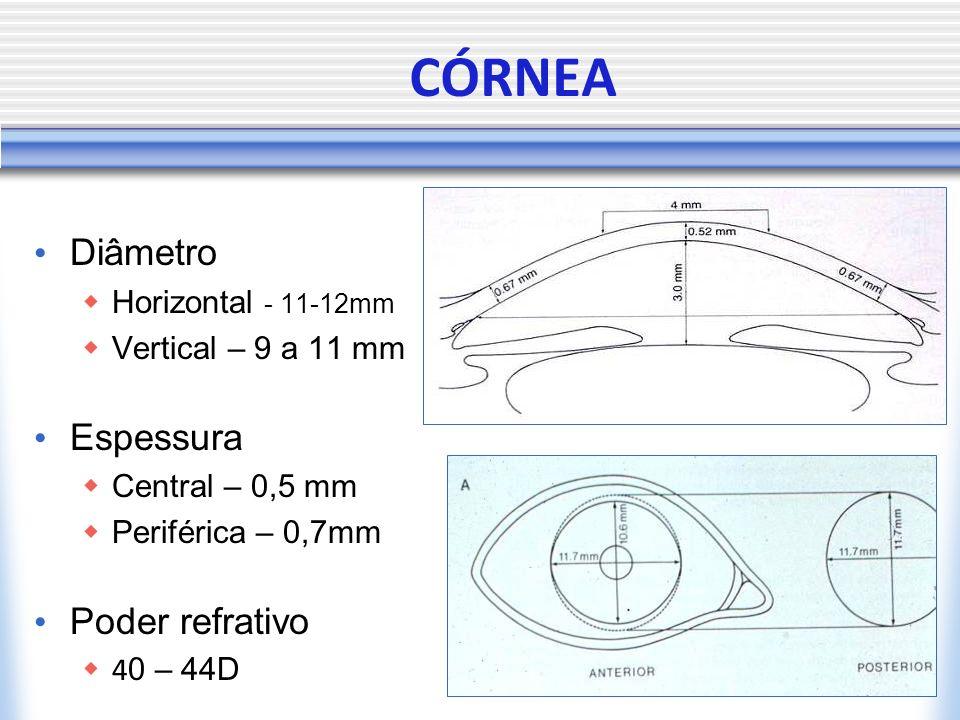 CÓRNEA Diâmetro Espessura Poder refrativo Horizontal - 11-12mm
