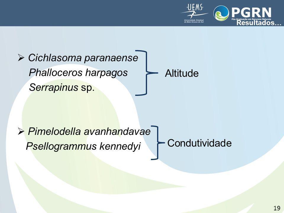 Cichlasoma paranaense Phalloceros harpagos Serrapinus sp.