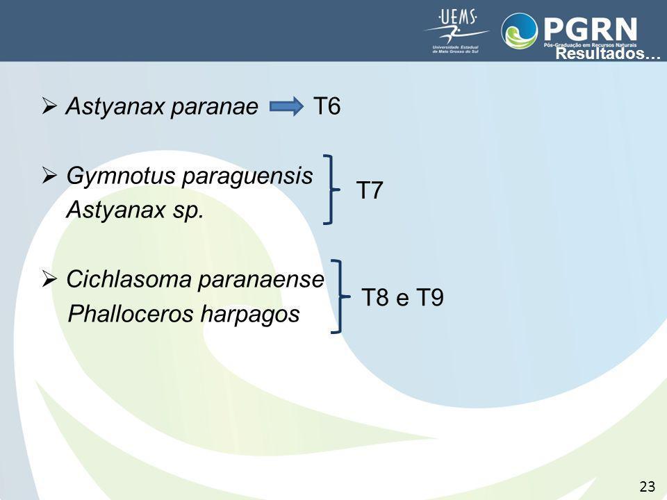 Cichlasoma paranaense Phalloceros harpagos T7