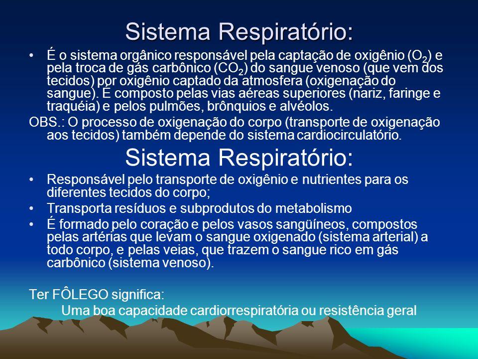 Sistema Respiratório: