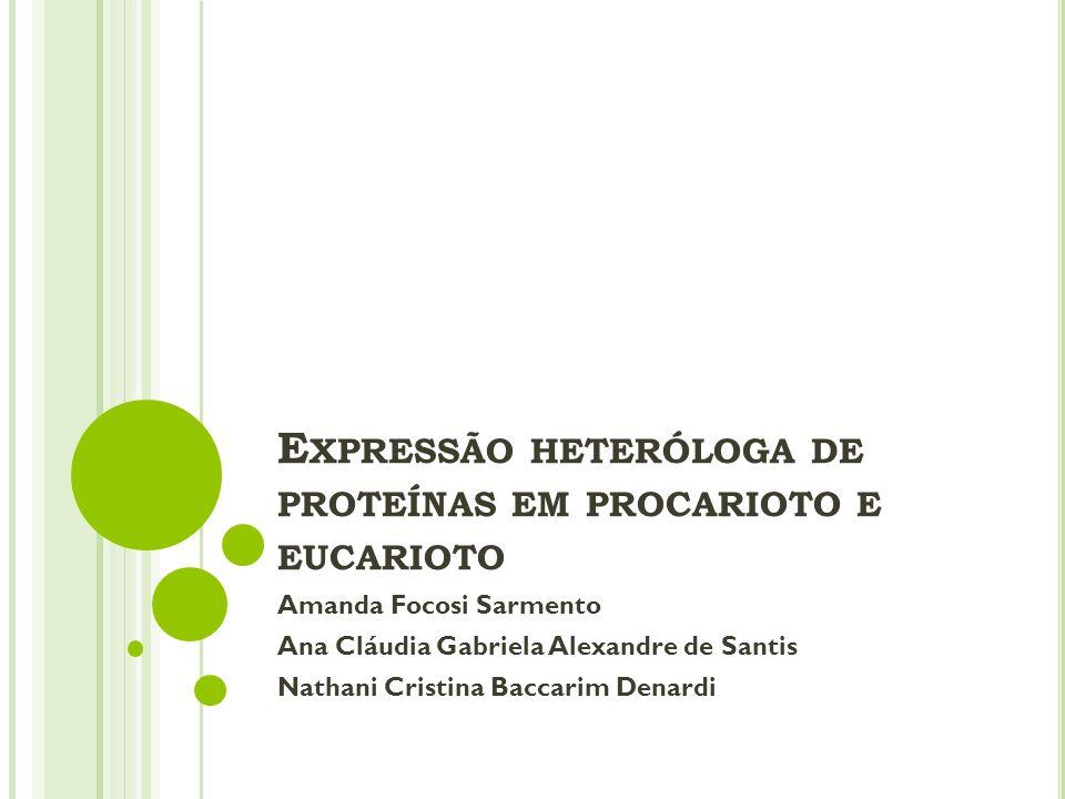 Expressão heteróloga de proteínas em procarioto e eucarioto