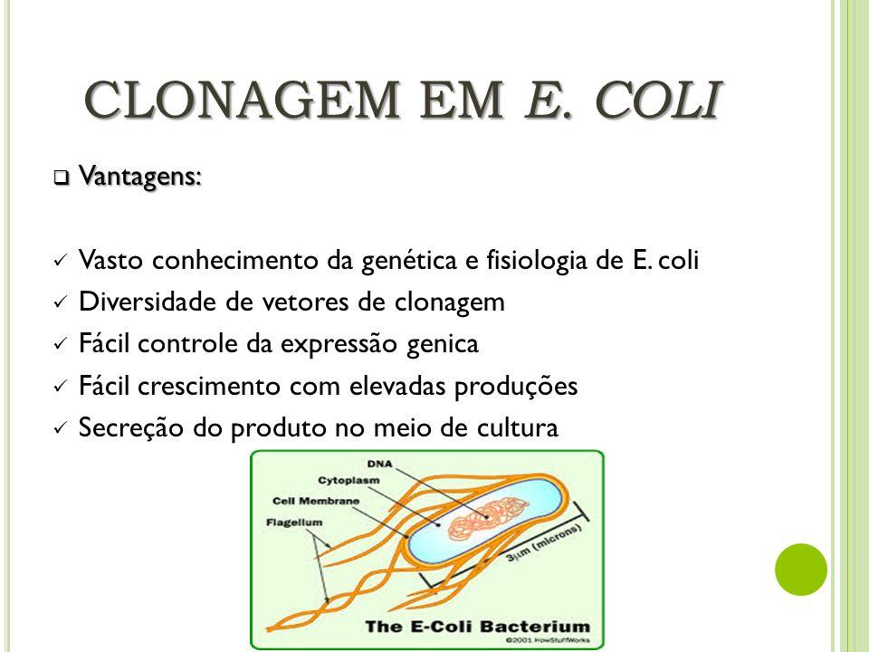 CLONAGEM EM E. COLI Vantagens: