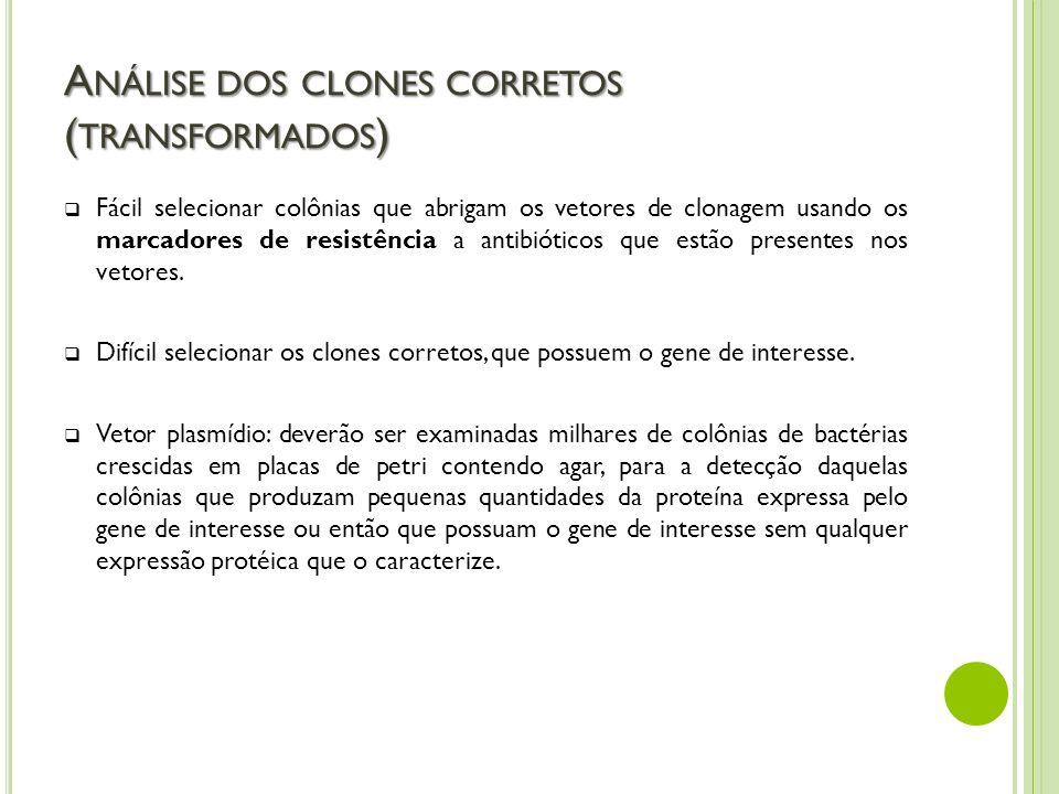 Análise dos clones corretos (transformados)
