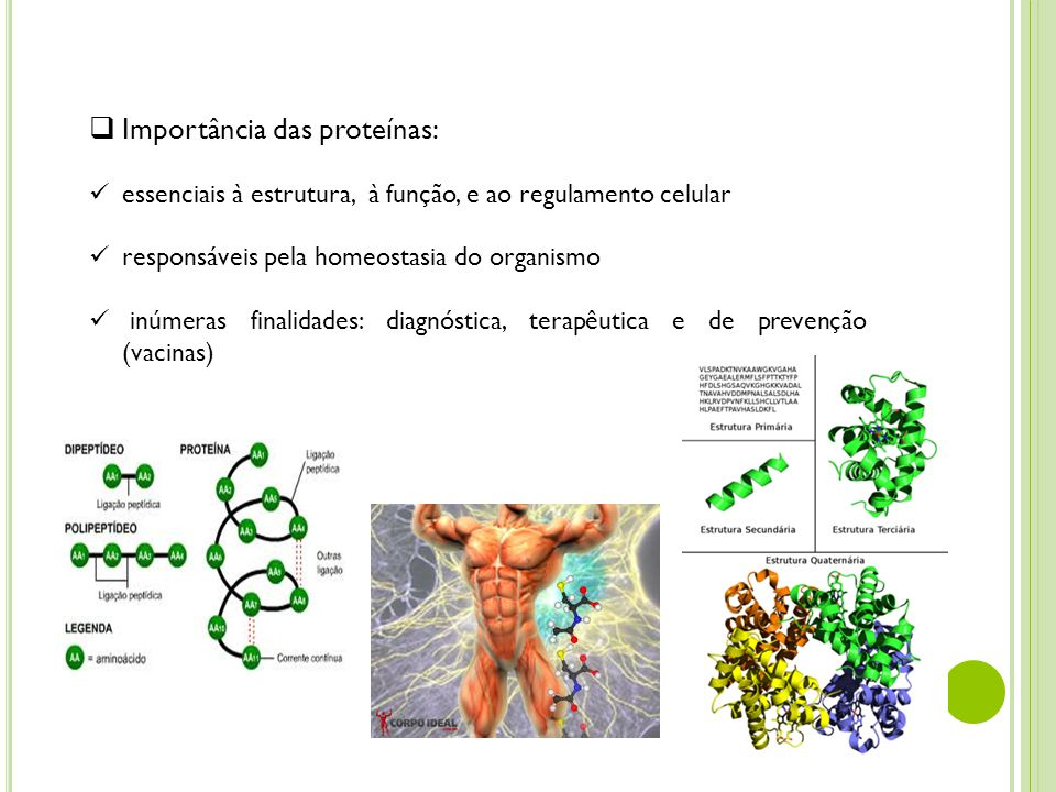Importância das proteínas: